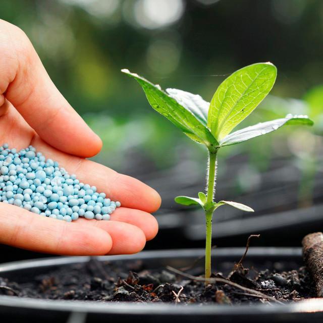 фото удобрений и стимуляторов роста
