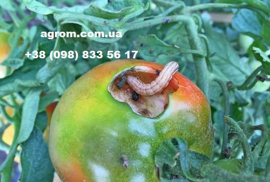 Инсектицид Амплиго, 5 л
