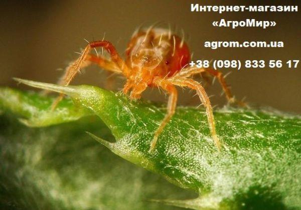 Инсектицид-акарицид Балазо, 1 л