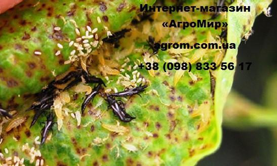 Инсектицид Спинтор (Spintor), 250 мл