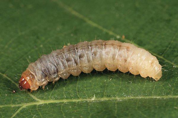 Инсектицид Волиам Тарго, 250 мл