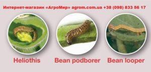 фото вредителей инсектицид Altacor